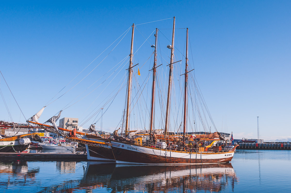North Sailing IJsland walvis tour