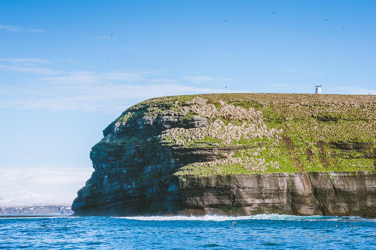 puffin-island