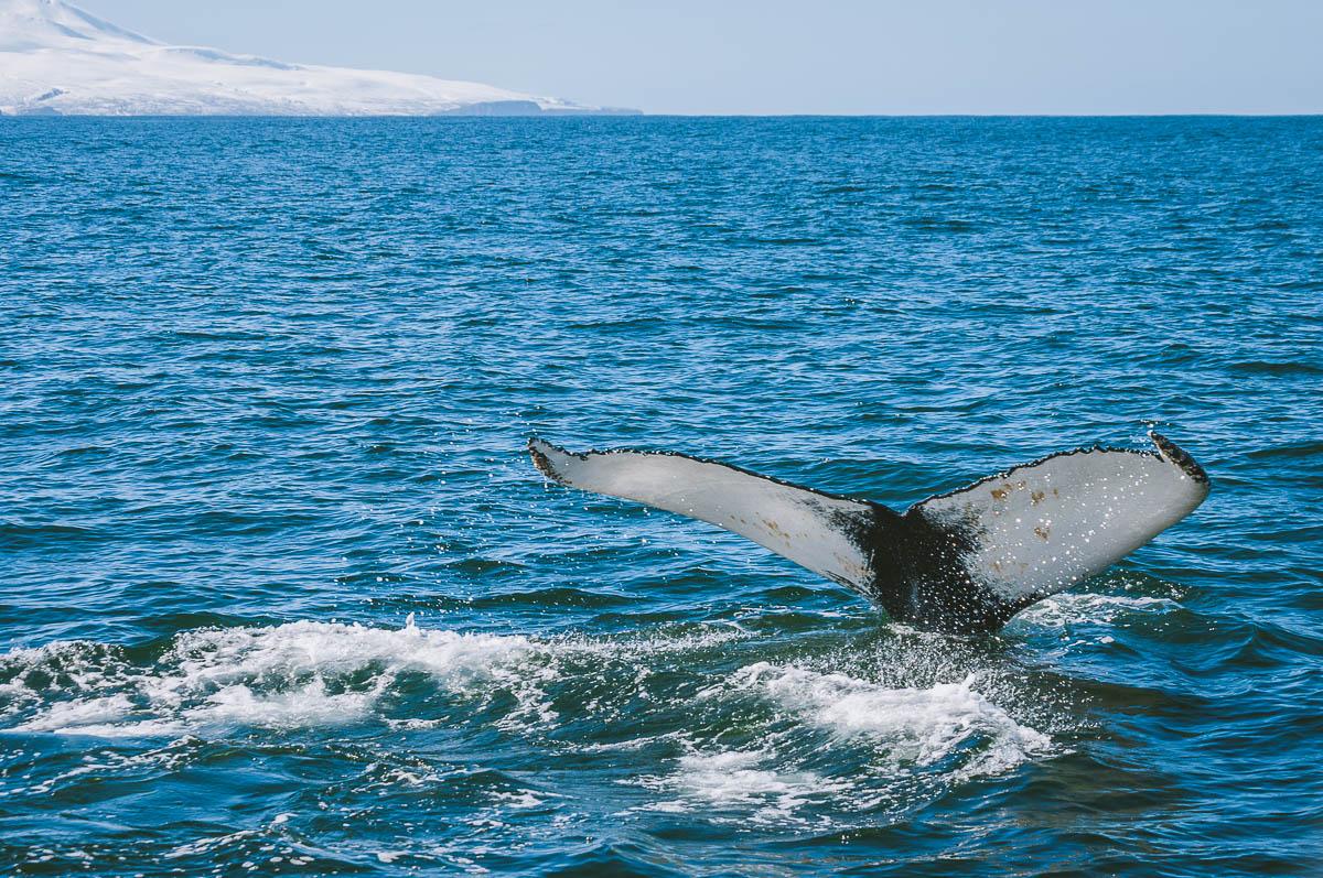 walvis-tour-staart-walvis