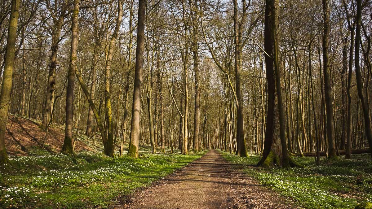 Wandelen door het Zoniënwoud